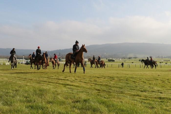 Cheltenham gallops gallery